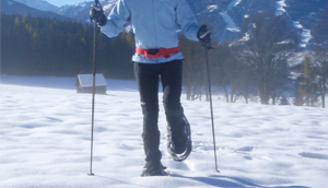Sněžnice